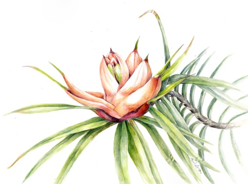 Pandanus flower1 painting