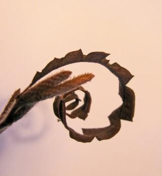 Comp leaf