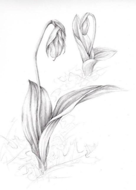Cyp drawing